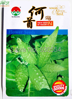 New rare 1 original packing Polygonum multiflorum seed Excellent Chinese herb bonsai plant home garden free shipping(China (Mainland))