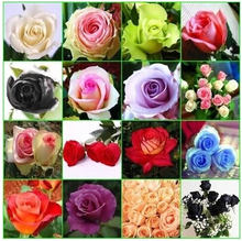 rose seeds, Rainbow rose seeds Beautiful rose seed Bonsai plants Seeds for home & garden – 14 Kinds Of 300 Seeds