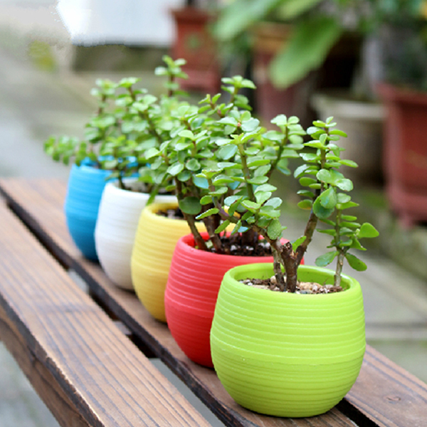 Wholesale Plastic Flower Pot Succulent Plant Flowerpot For Home Office Decoration 4 Color Garden Supplies(China (Mainland))