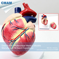 CMAM A06 Dog Heart Model Animal Anatomical Models for Veterinarian s Reference