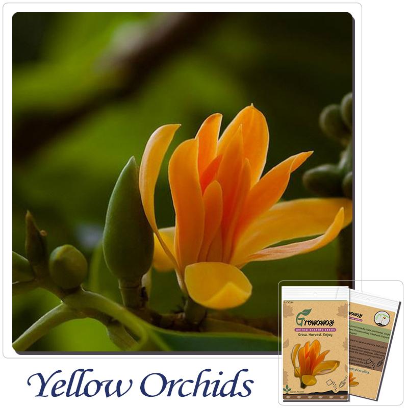 online kaufen gro handel orchidee s mlinge aus china. Black Bedroom Furniture Sets. Home Design Ideas