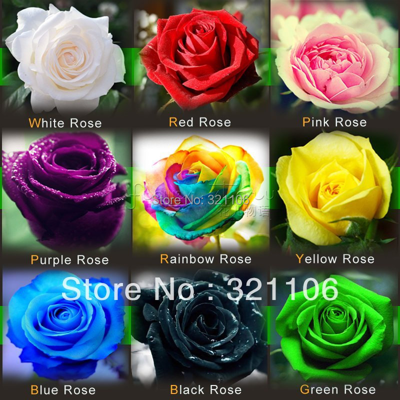 Buy rainbow rose black rose blue rose for How to color roses rainbow