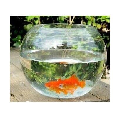 Hot sell creative large round glass aquarium turtle for Small glass fish tank