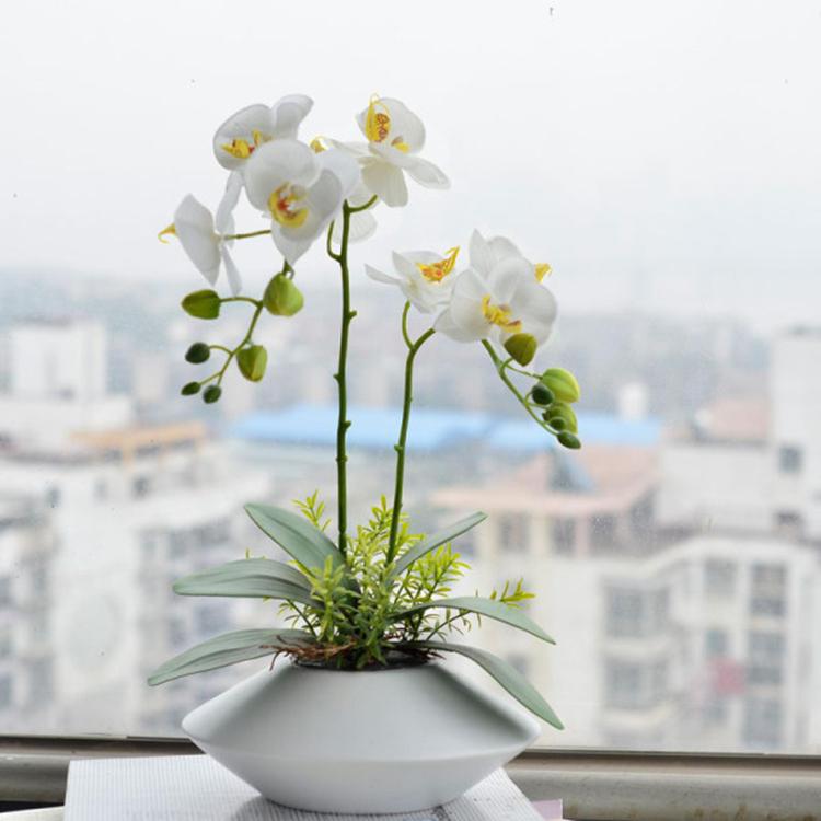купить семена фаленопсиса в интернет только выводит лишнюю