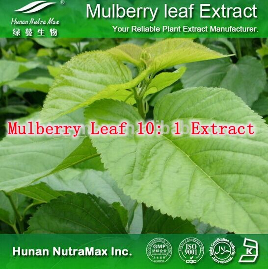 5 Pack High Quality Mulberry Leaf 10: 1 Extract 500mg x 500caps free shipping<br><br>Aliexpress