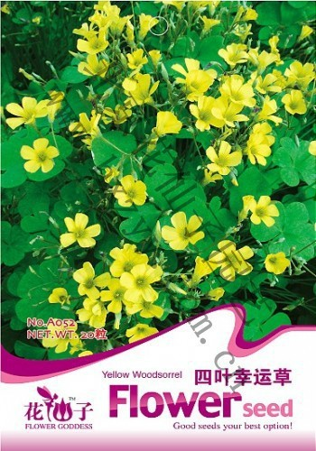 Flower seeds lucky grass seeds four leaf clover alfalfa grass bonsai seeds 20 PCS / bag Original packaging Home Garden Bonsai(China (Mainland))