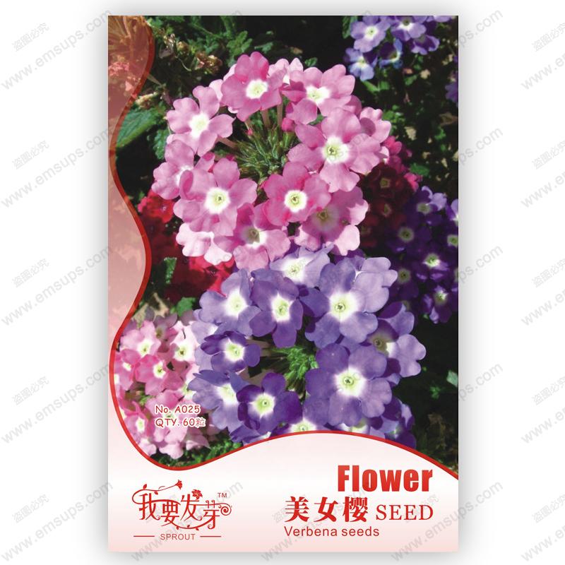 Original pack Multicolor Verbena seeds perennial verbena hybrida seed Hydrangea Verbena balcony ornamental flowers - 60 pcs(China (Mainland))