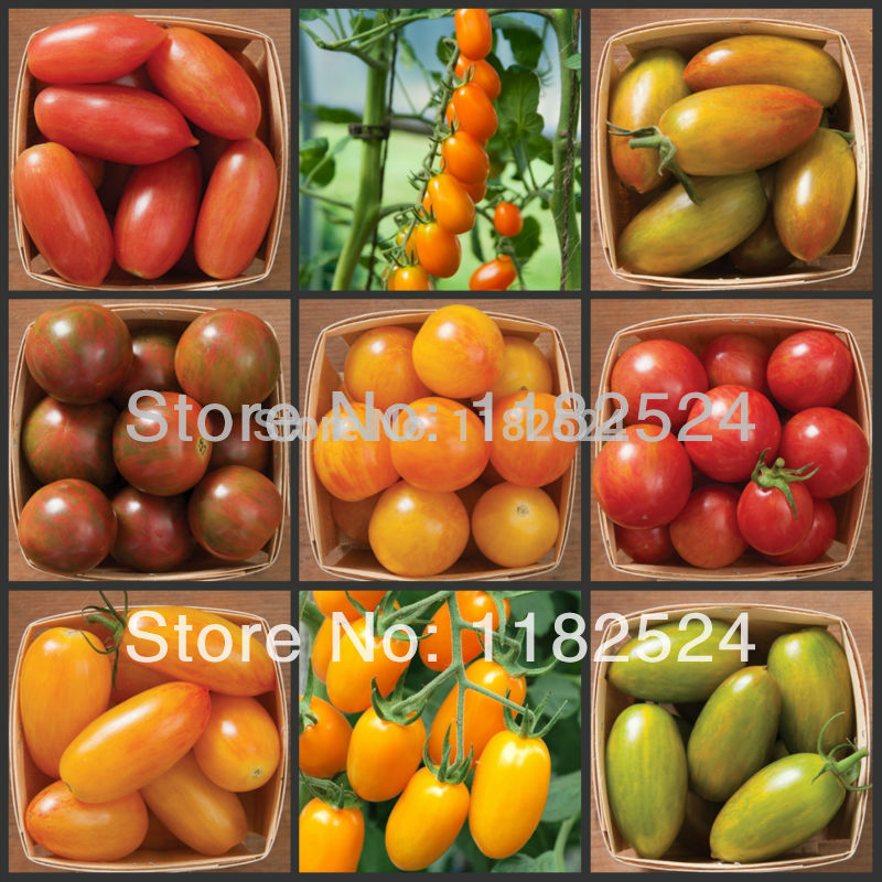 are tomatoes fruits or vegetables fruit center