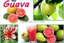New Home Garden Plant 50 Seeds Fresh Sweet Red Guava Psidium Guajava Thai Pink Fresh Large Fruits Free Shipping(China (Mainland))