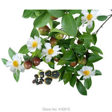 Buy New Crop Chinese Green Tea Tree Seeds Fresh CAMELLIA SINENSIS SEEDS Garden Bonsai Green Tea Flower Plant for $4.13 in AliExpress store