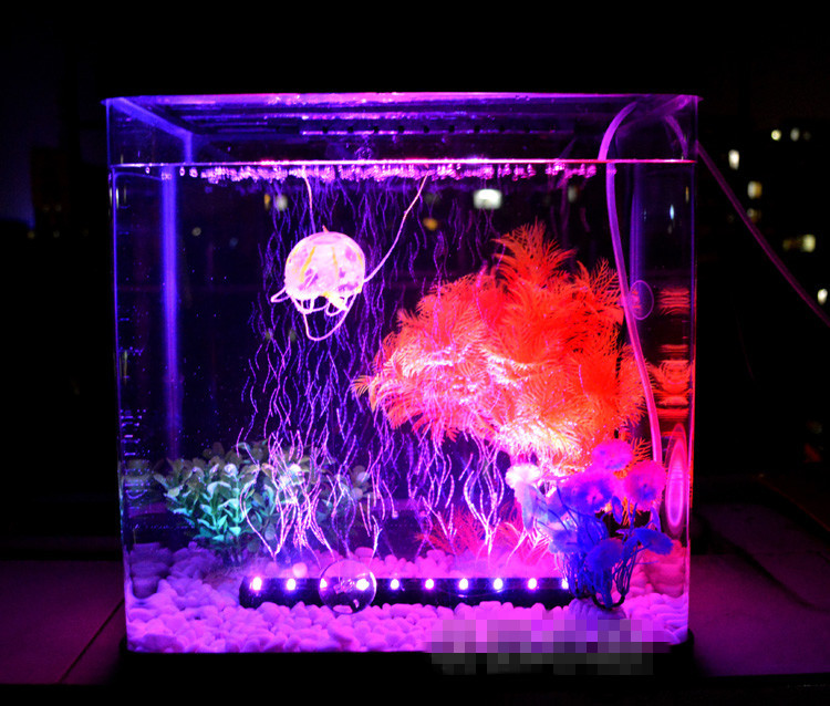 décoration aquarium led