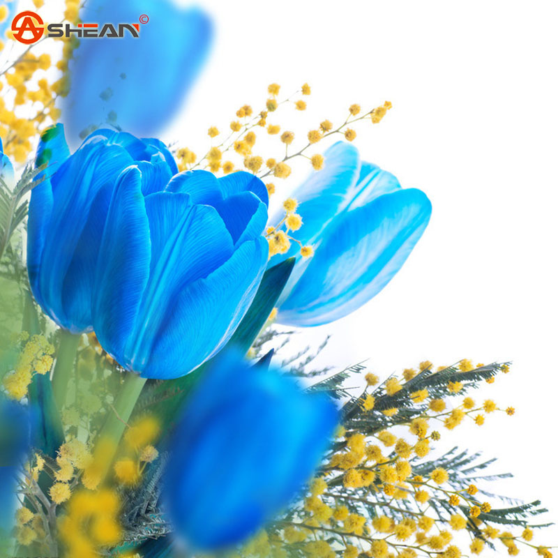 Rare Blue Tulips Flowers Seeds Bonsai Tulip Seeds Flower Plants 100 Particles / lot(China (Mainland))
