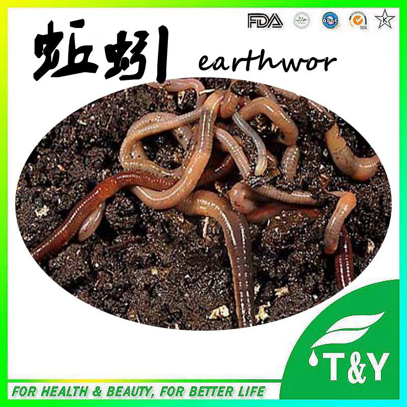 Factory suply high ativity Eartworm Powder Extract Lumbrkinase<br><br>Aliexpress