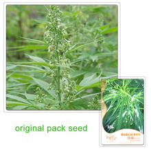Buy 30 Seeds/Pack, Medical Herb Hemp Seeds Balcony Potted Flowers Potted Plants Seeds Home Garden for $1.45 in AliExpress store