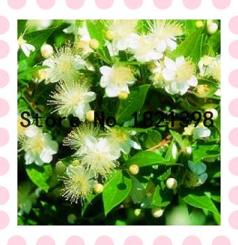 De hoja perenne plantas de maceta compra lotes baratos for Plantas hoja perenne