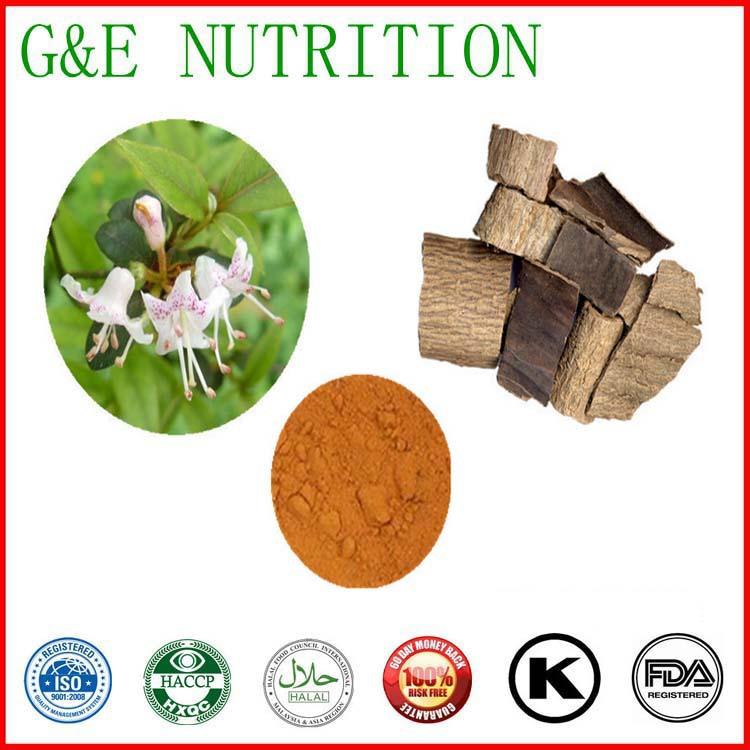 Top Quality 10% Chlorogenic acid Eucommia Ulmoides Extract Powder