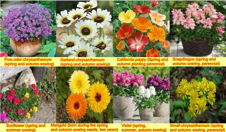 Compre 16 tipos de flores sementes da for Clases de plantas ornamentales