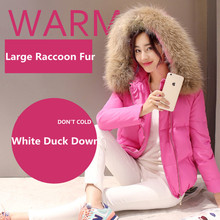 Fashion New Winter Large Real Raccoon Fur Collar Women Down Coat Short Casual Thick Slim White