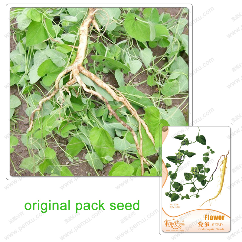 Original Pack 30 Seeds / Pack, Codonopsis Seed, herbal high medicinal value, ornamentals, balcony patio garden planting seeds(China (Mainland))