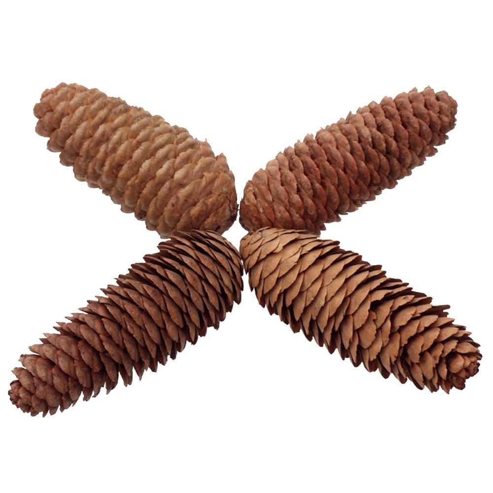 6 x natural large long pine cones for craft decoration for Large christmas pine cones