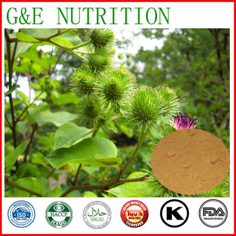 Best natural Great Burdock seed Extract 20:1 500g<br><br>Aliexpress