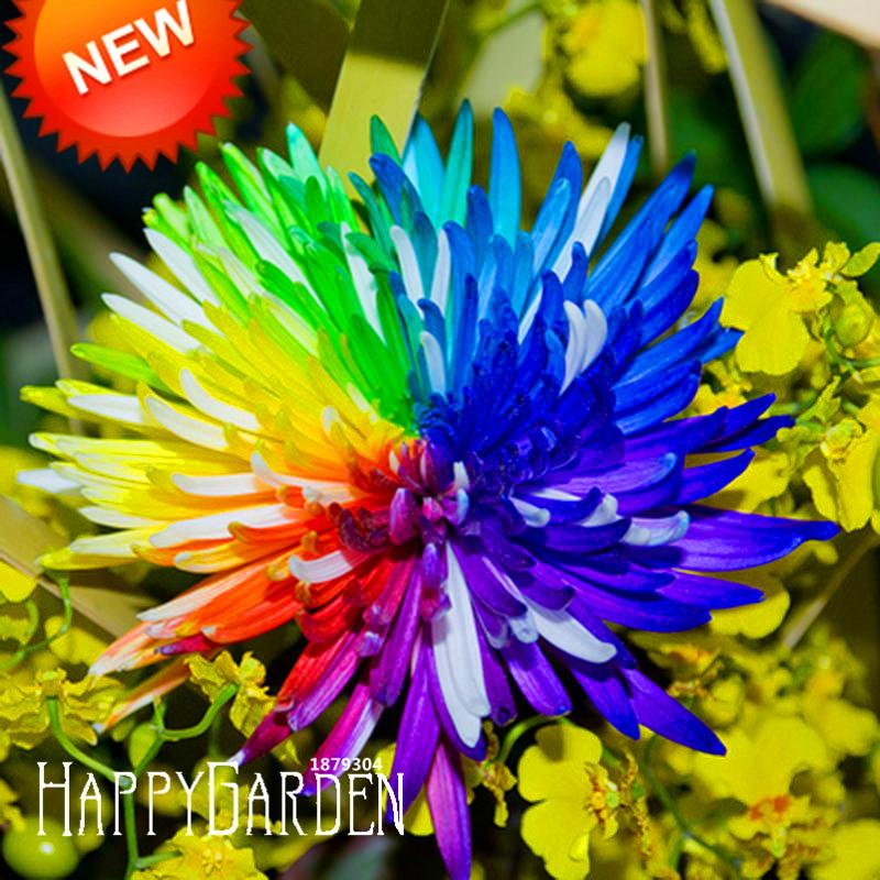 Гаджет  Promotion!Rainbow Chrysanthemum Flower Seeds Rare Color DIY Home Garden Flower Plant  50 Seeds / bag,#0IM677 None Дом и Сад