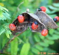 20 Seeds - Abrus Precatorius Seeds - Red Rosary Prayer Bead Seeds free shipping(China (Mainland))