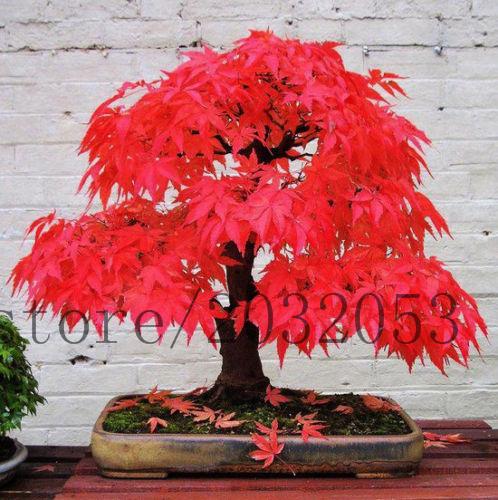 mini bonsai baum kaufen billigmini bonsai baum partien aus china mini bonsai baum lieferanten. Black Bedroom Furniture Sets. Home Design Ideas