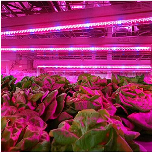 2014New Design+ 10pcs 0.5M LED10w grow light bars light strip Hydroponic Plant flowers vegatables Greens LED Grow plant growing<br><br>Aliexpress