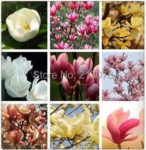 magnolia seed, magnolia tree, magnolia flowers 100pcs(China (Mainland))