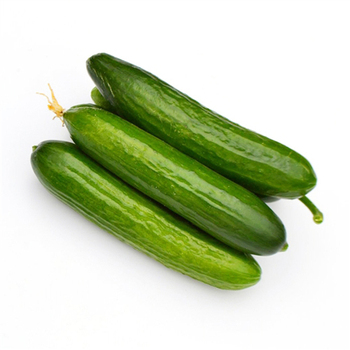 3 Packs Of Dutch Cucumber Seed / 1 Pack 5 Seeds Cucumis Sativus Holland Cucumber Vegetable Seeds Hot C020