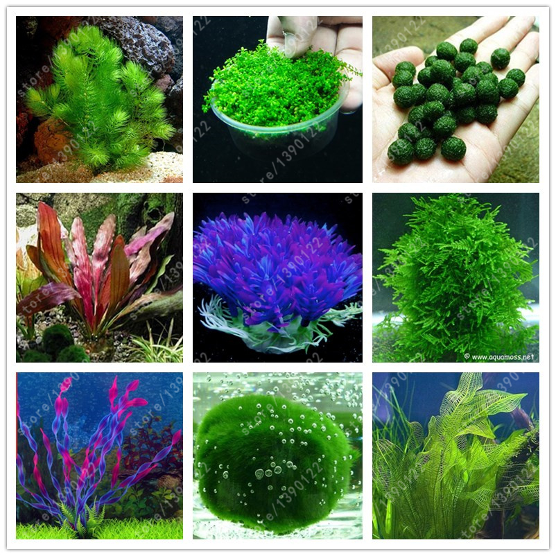 Popular aquatic grasses buy cheap aquatic grasses lots for Fake pond plants