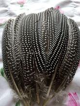 wholesale 10pcs high quality beatiful natural  guinea fowl feather 12-17cm / 5-7inch  Decorative diy(China (Mainland))