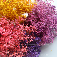 Millions of stars _ high-quality decorative diy manual living dried flower embossed in yunnan(China (Mainland))