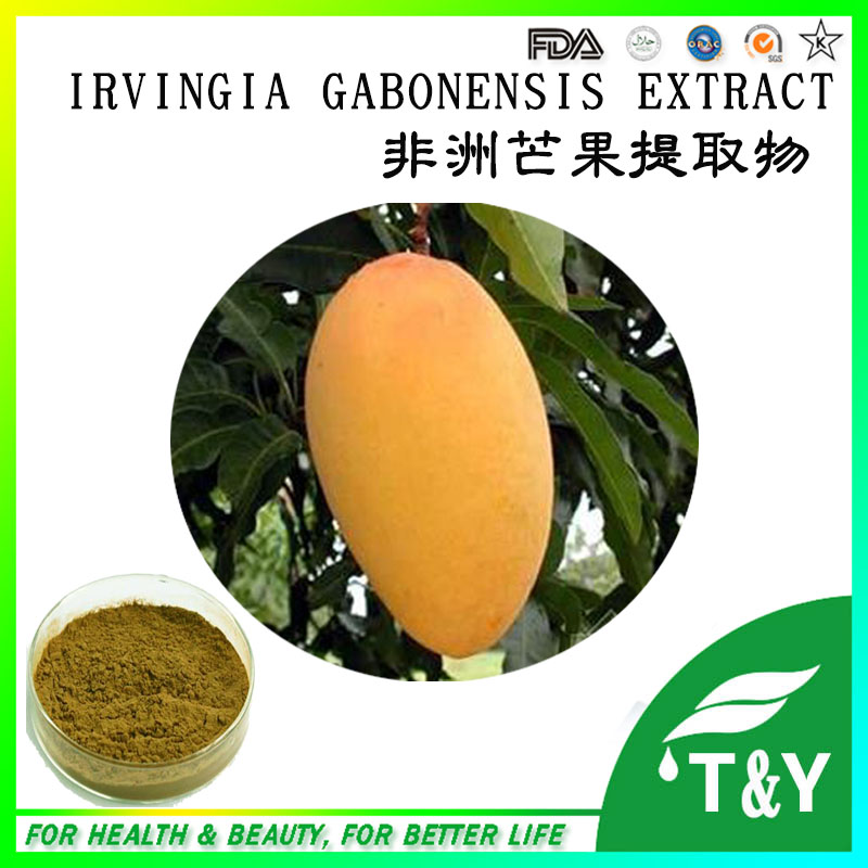 500g Natural Mango Fruit Extract with free shipping(China (Mainland))