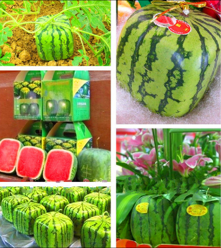 , Outdoor Plants Fruit Seeds 30 Piece Simple Geometric Square Watermelons Seeds, Summer fun - ALI-Express No.1 store