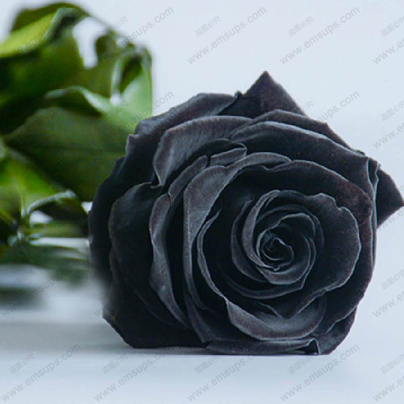 150 PCS China Rare Black Rose Flowers Rare Amazingly Beautiful Black Rose Seeds a Popular Garden Flower(China (Mainland))