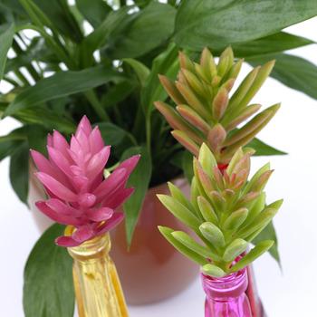 1pc Artificial Succulent Without Pot Plant Grass Garden Home Decor DIY new arrival