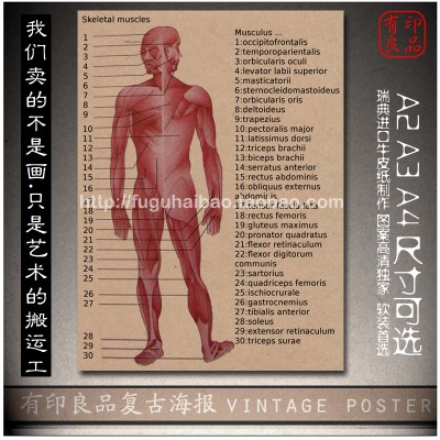 """Top fashio vintage kraft paper """"Human Anatomy Skeleton"""" home decorative pictures for bedroom wall art craft sticker 42x30cm(China (Mainland))"""