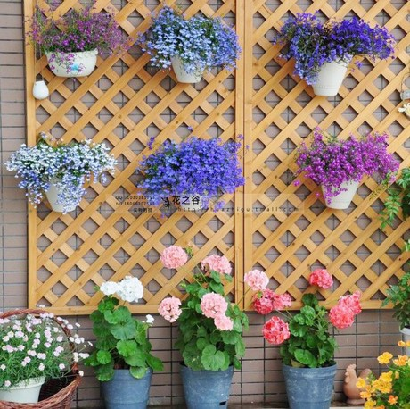 Гаджет  wholesale Flower seeds flower seeds petunia seeds diaolan bonsai balcony 2 100 None Дом и Сад