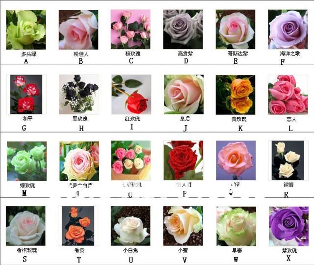 Rose seeds set(24 type*10 pcs each)