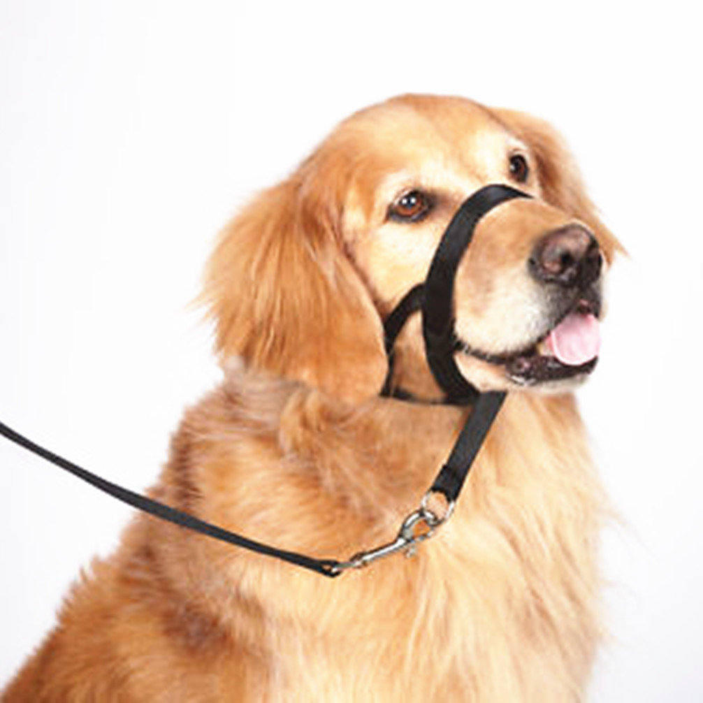 Bark Muzzle For Small Dogs