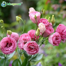 100PCS Red Eustoma Seeds Perennial Flowering Plants Lisianthus Multicolor for DIY Home & Garden(China (Mainland))
