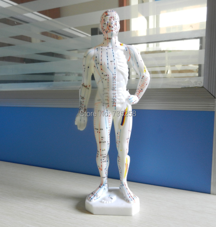 Colorado School Of Traditional Chinese Medicine: 27 Cm, The Human Body Acupuncture Point Model ,The Doctor