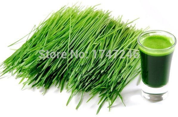 100% Pure &amp; Natual Organic Young Barley Grass Powder Dietetic Drink 1kg Free Shipping<br><br>Aliexpress