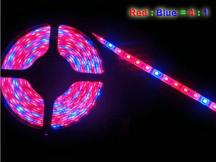 Pflanzenlicht LED-Streifen