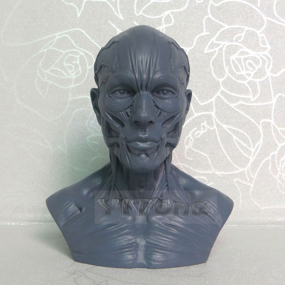 Free Shipping 1PCS 10CM Arts Human Musculoskeletal Model Fashion Design Carved Bust Skull Model For Drawing Model Art Supplies