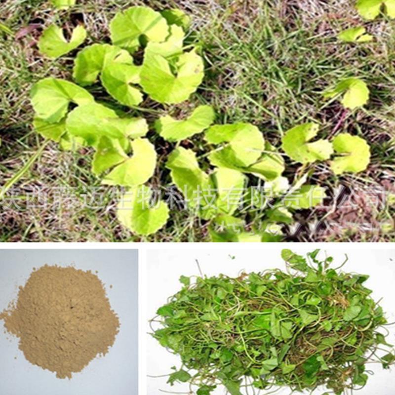 1кг 30:1 экстракт Центеллы азиатской, экстракт порошка диких крупных листьев Готу Колы травяной чай Детокс фитнес-Здравоохранение китайских трав H5039-45