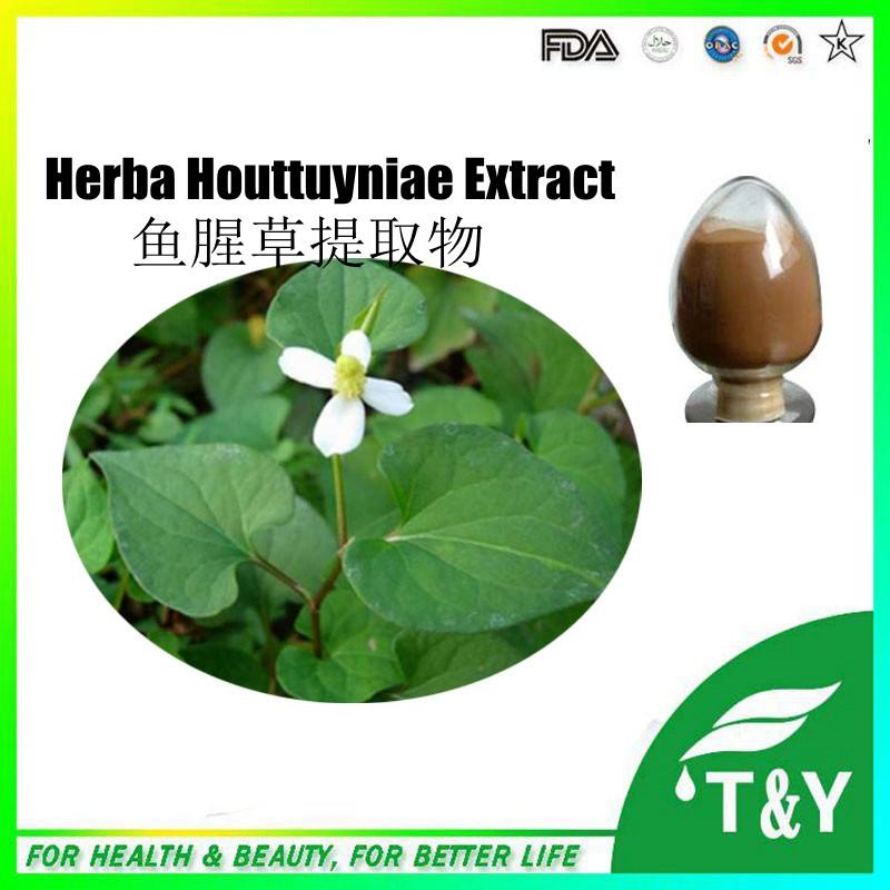 Herba Houttuyniae extract/Heartleaf Houttuynia Herb/Houttuynia cordata 300g/lot<br><br>Aliexpress