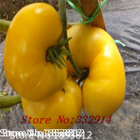 Sale!Good News!100 seeds Mixed fresh organic vegetables, tomatoes assured rainbow of fruit and vegetable seeds balcony flower po(China (Mainland))